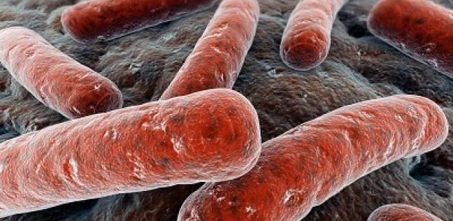 الجمرة الخبيثةAnthrax وتركيا الآن - طرق العدوى و العلاج