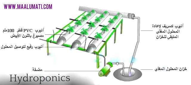 Hydroponics مكونات الزراعة المائية في الأنابيب