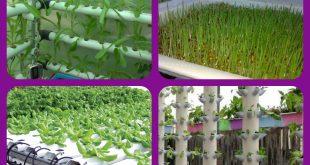 الزراعة المائية طرق الزراعة المائية أدوات الزراعة المائية