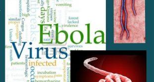الإيبولا و علاجات جديدة في الكونغو